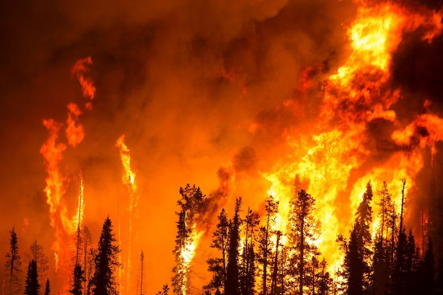 Promising solutions rise to the top of the wildfire discussion