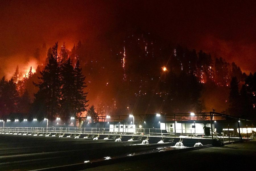 The 2017 eagle creek fire burns near Bonneville Dam