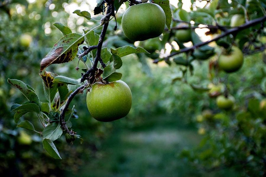 Two-tier tax a burden for cider producers